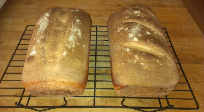 sourdough whitebread #1